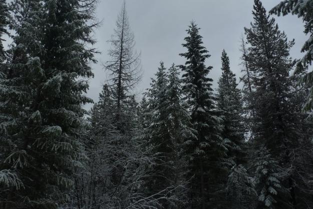 nov 2014 017