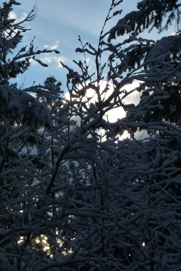 Nov Snow 002