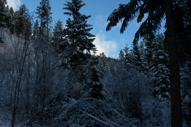 Nov Snow 003