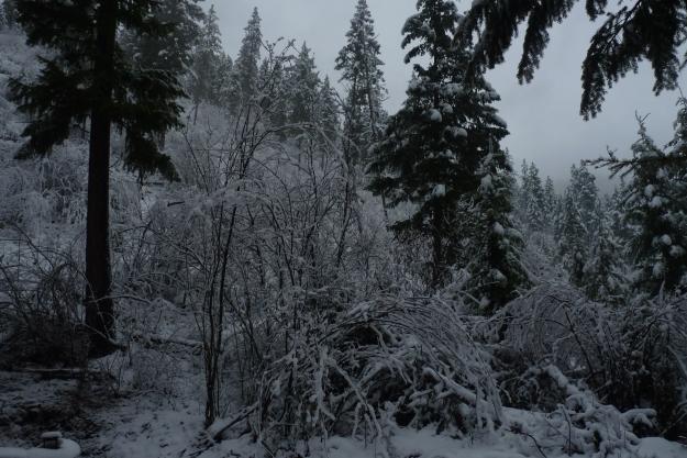 nov snow 005