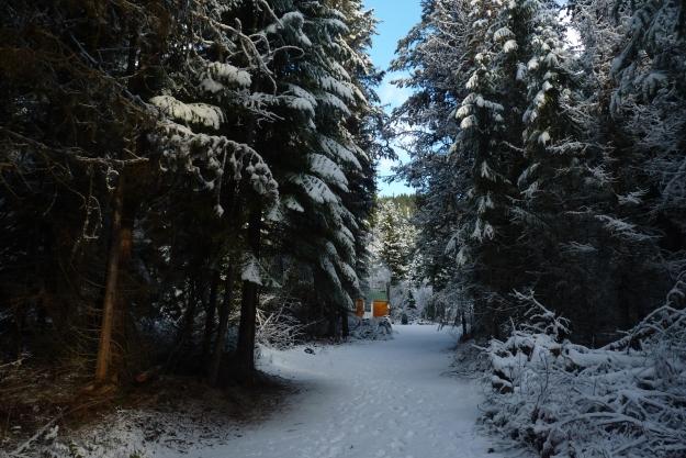 Nov Snow 013