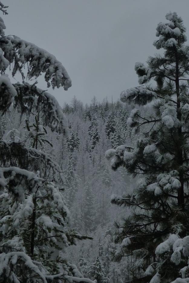 nov snow 017