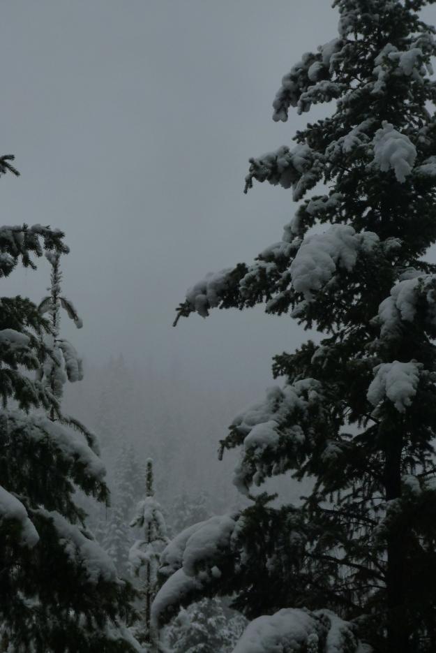 nov snow 019