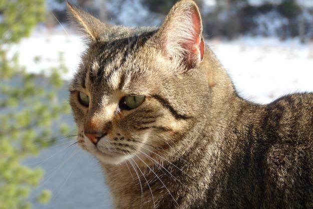 friends cat