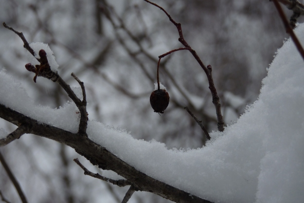 Last Berry of the Year