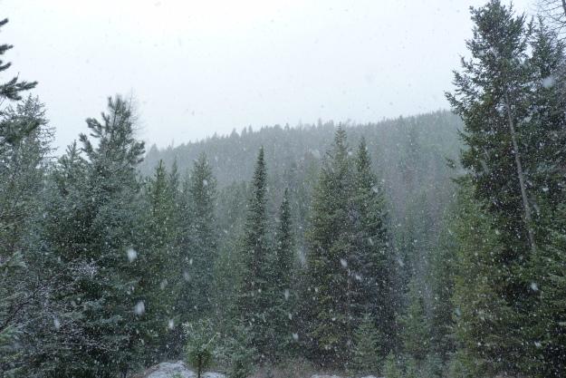 spring snow 001